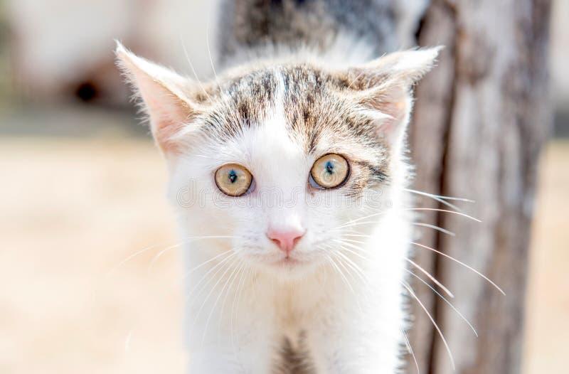 Portrait of little cat. Close up portrait of little cat,selective focus royalty free stock photography