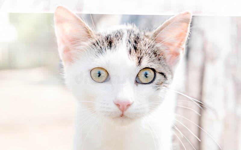 Portrait of little cat. Portrait of little white cat,selective focus stock photos