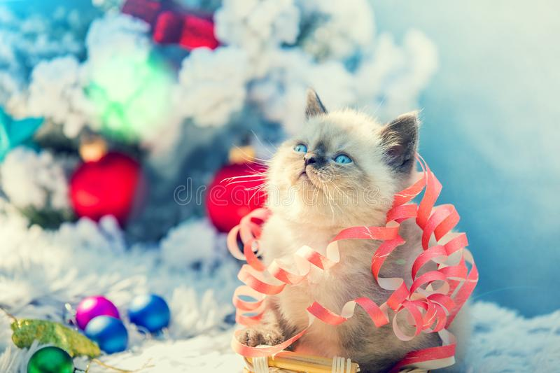 Kitten entangled in Christmas streamer. Portrait of a little cute kitten entangled in Christmas streamer. Kitten sitting near decorated fir tree royalty free stock photos