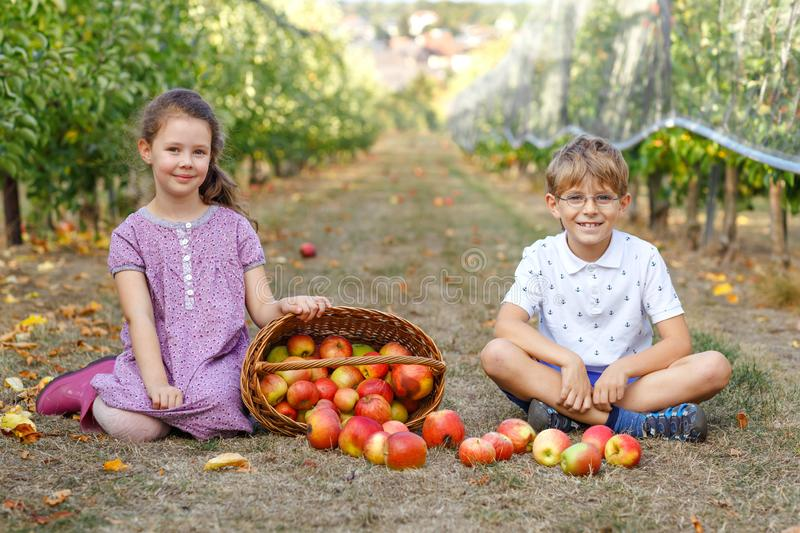 Portrait of little girl and kid boy with red apples in organic orchard. Happy siblings, children, brother and sister royalty free stock photos