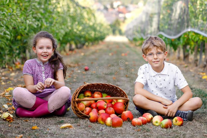 Portrait of little girl and kid boy with red apples in organic orchard. Happy siblings, children, brother and sister stock image