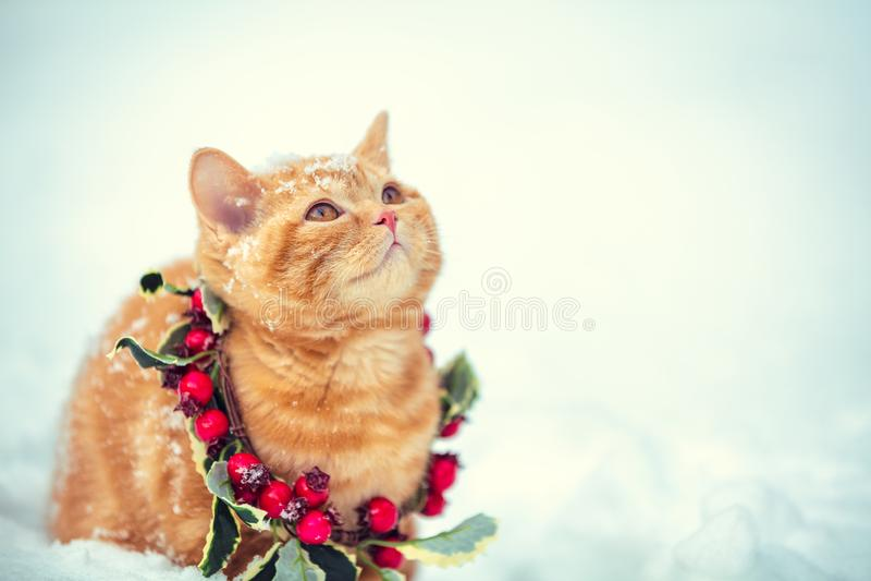 Portrait of a little kitten wearing Christmas wreath royalty free stock image