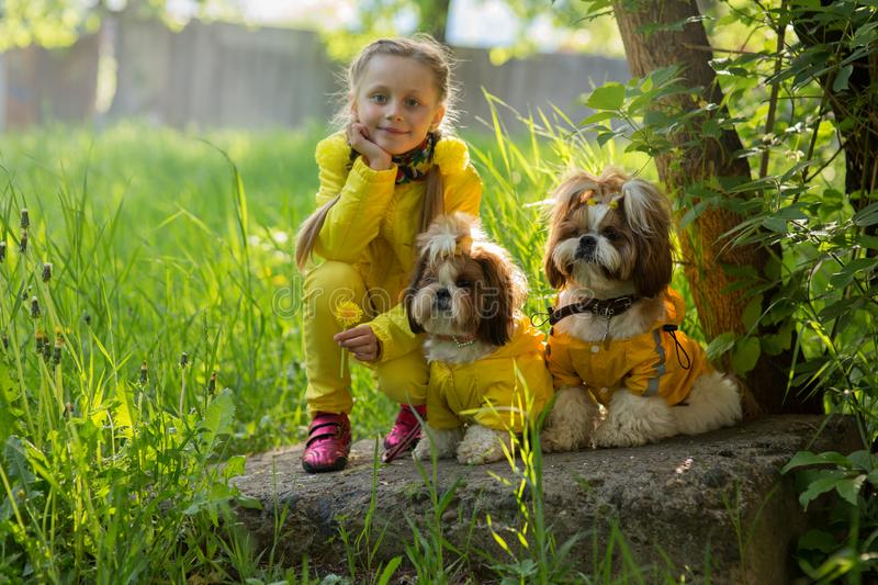 Portrait of a little smiling girl with two dogs in yellow clothes. Girl with Shi Tzu dogs stock photos
