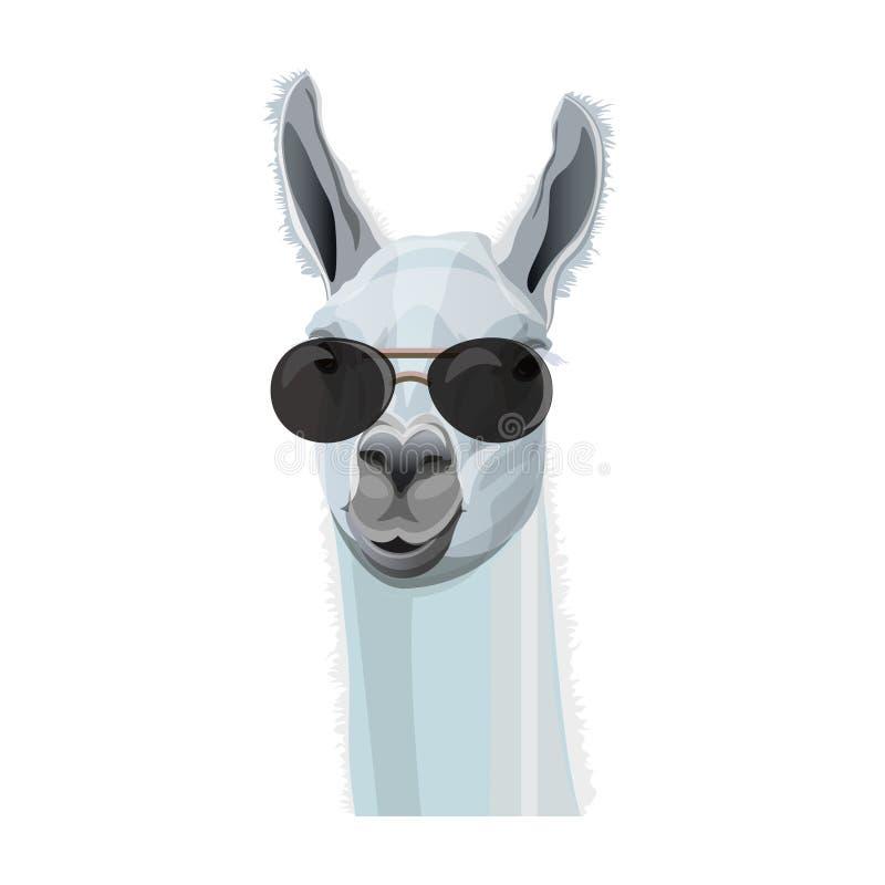Portrait of llama in glasses. Comic portrait of llama in black glasses. Vector illustration isolated on white background stock illustration
