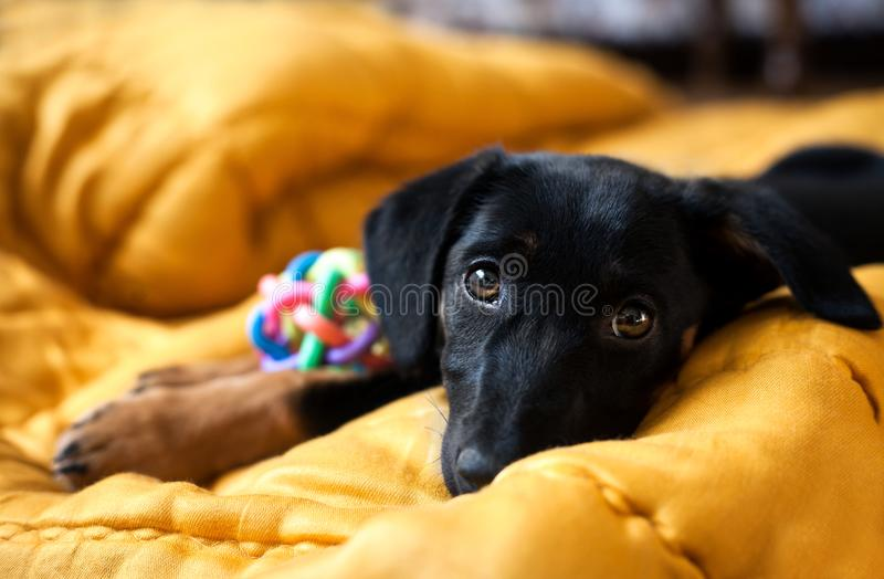 Portrait of a lonely dog royalty free stock photography