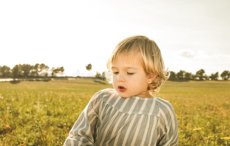 Portrait of a lovely little girl in the blonde field looking at the camera royalty free stock image