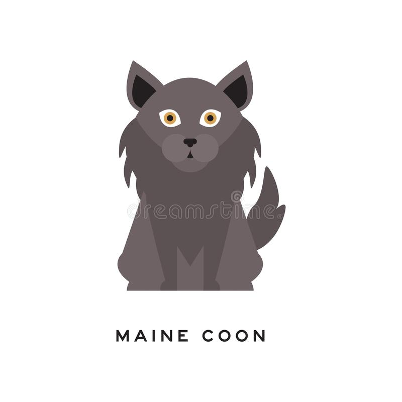 Portrait of maine coon cat. Adorable feline with gray long coat, ruff around neck and big brown eyes. Domestic animal. Cartoon purebred pet character. Isolated royalty free illustration