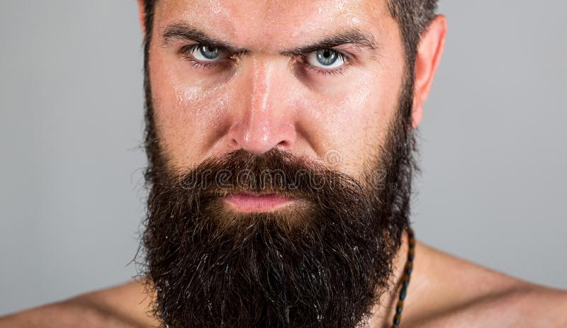 Portrait of masculinity. look of male. Hipster man with beard, mustache. man. Portrait brutal bearded man stock images