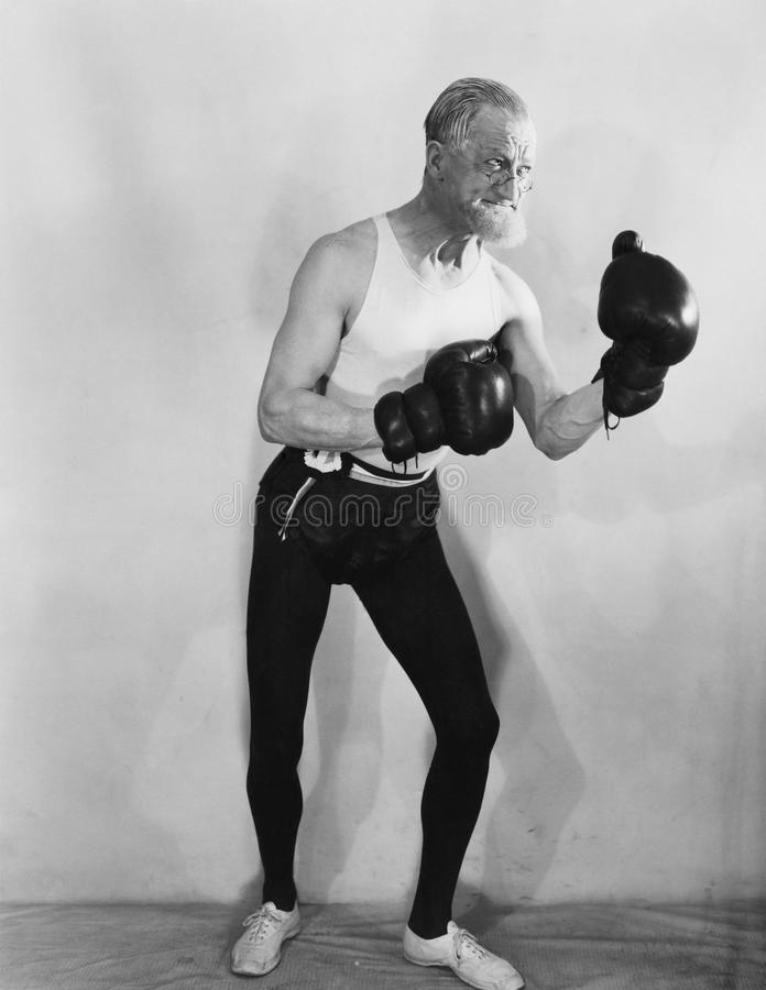 Portrait of mature boxer royalty free stock photography