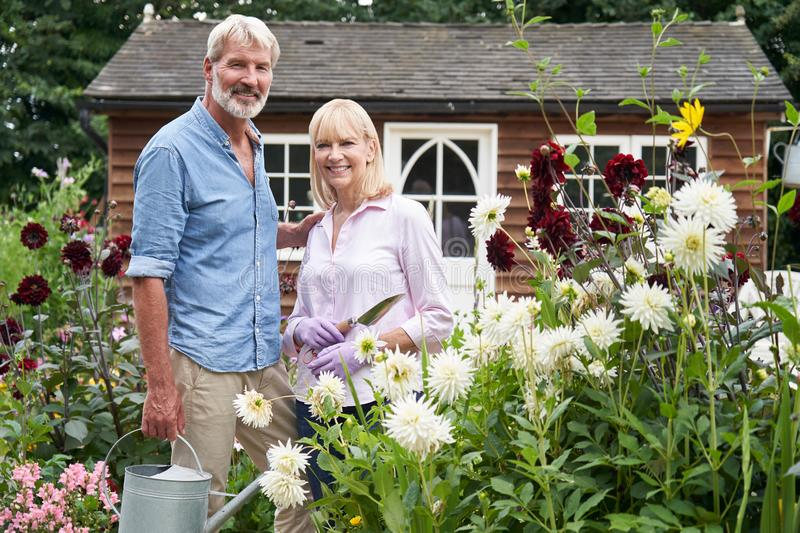 Portrait Of Mature Couple Working In Flower Beds In Garden At Home. Portrait Of Smiling Mature Couple Working In Flower Beds In Garden At Home stock photography
