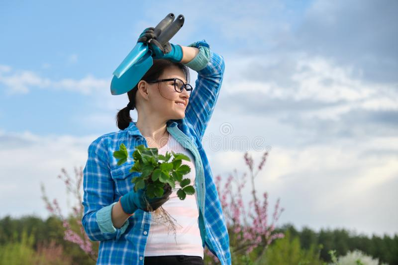 Portrait of mddle-aged woman in garden with tools, strawberry bushes royalty free stock image