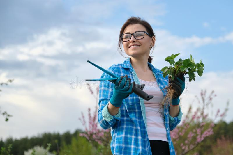 Portrait of mddle-aged woman in garden with tools, strawberry bushes stock photos
