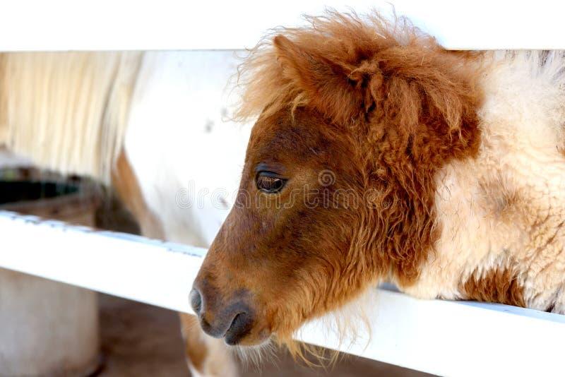 Portrait minuscule de tête de cheval dans la ferme photos stock