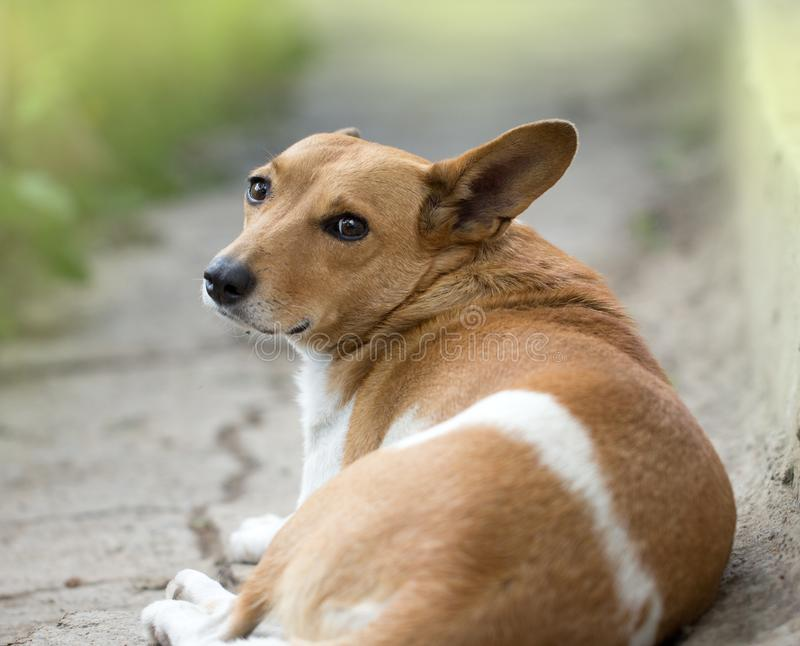 Portrait of mongrel dogs. In the park in nature royalty free stock photos
