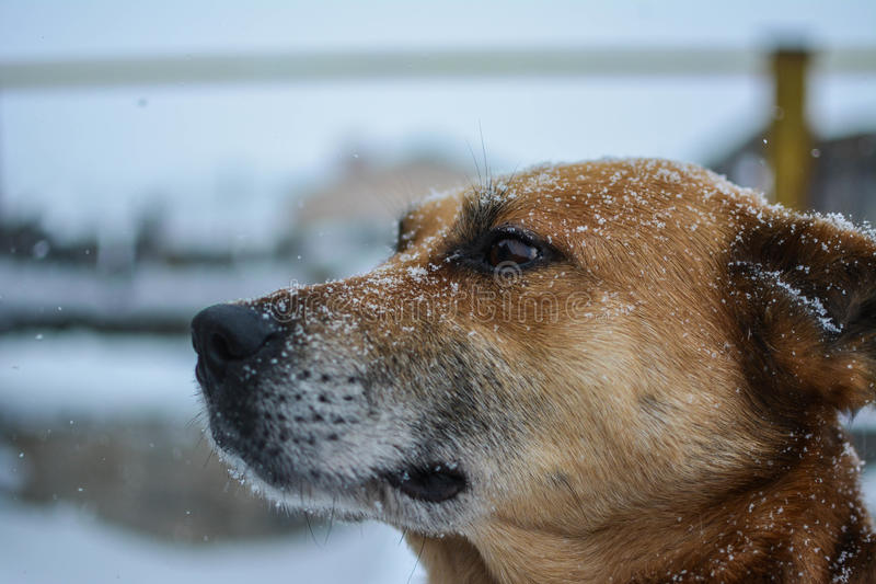 Portrait of mongrel in the streets at wintrer. royalty free stock images