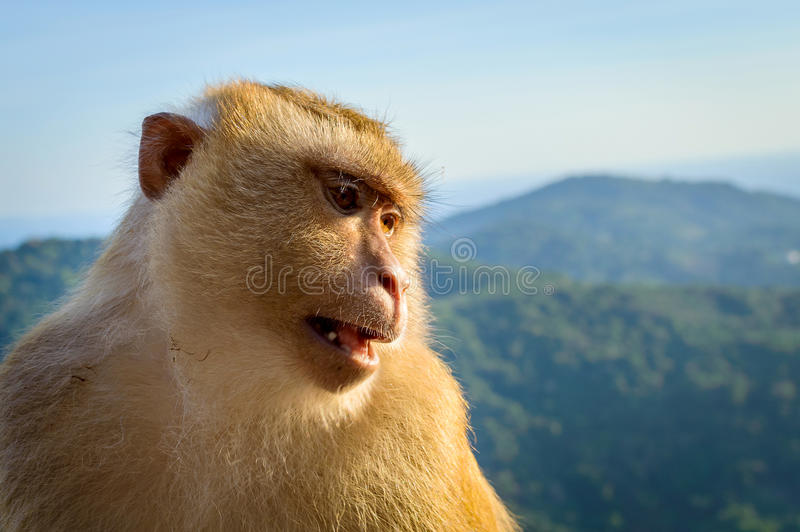 Portrait of monkey face by the the blue sky and mountains background stock photos