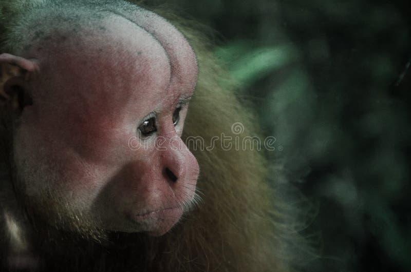 Portrait of a monkey stock image