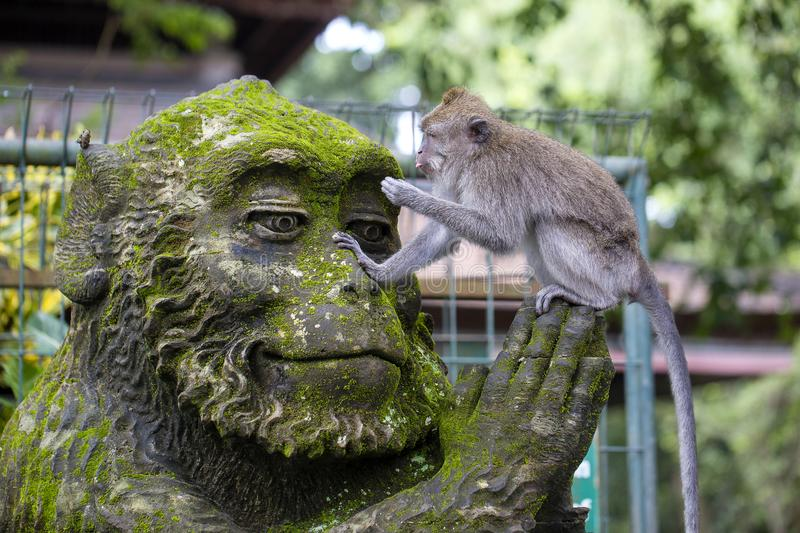 Portrait of a monkey sitting on a stone sculpture of a monkey at sacred monkey forest in Ubud, island Bali, Indonesia royalty free stock photo