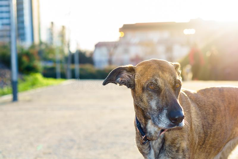 Portrait of my dog at sunset royalty free stock photography