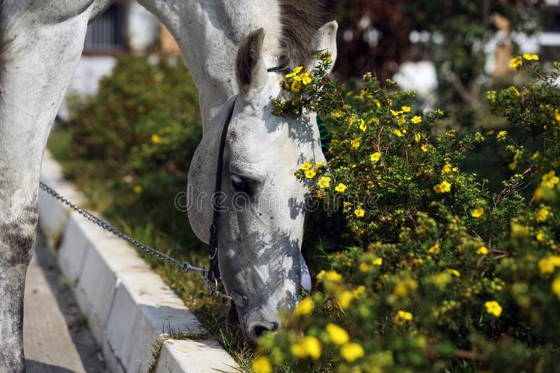 Portrait of nice race horse around flower outdoor sunny day stock photography