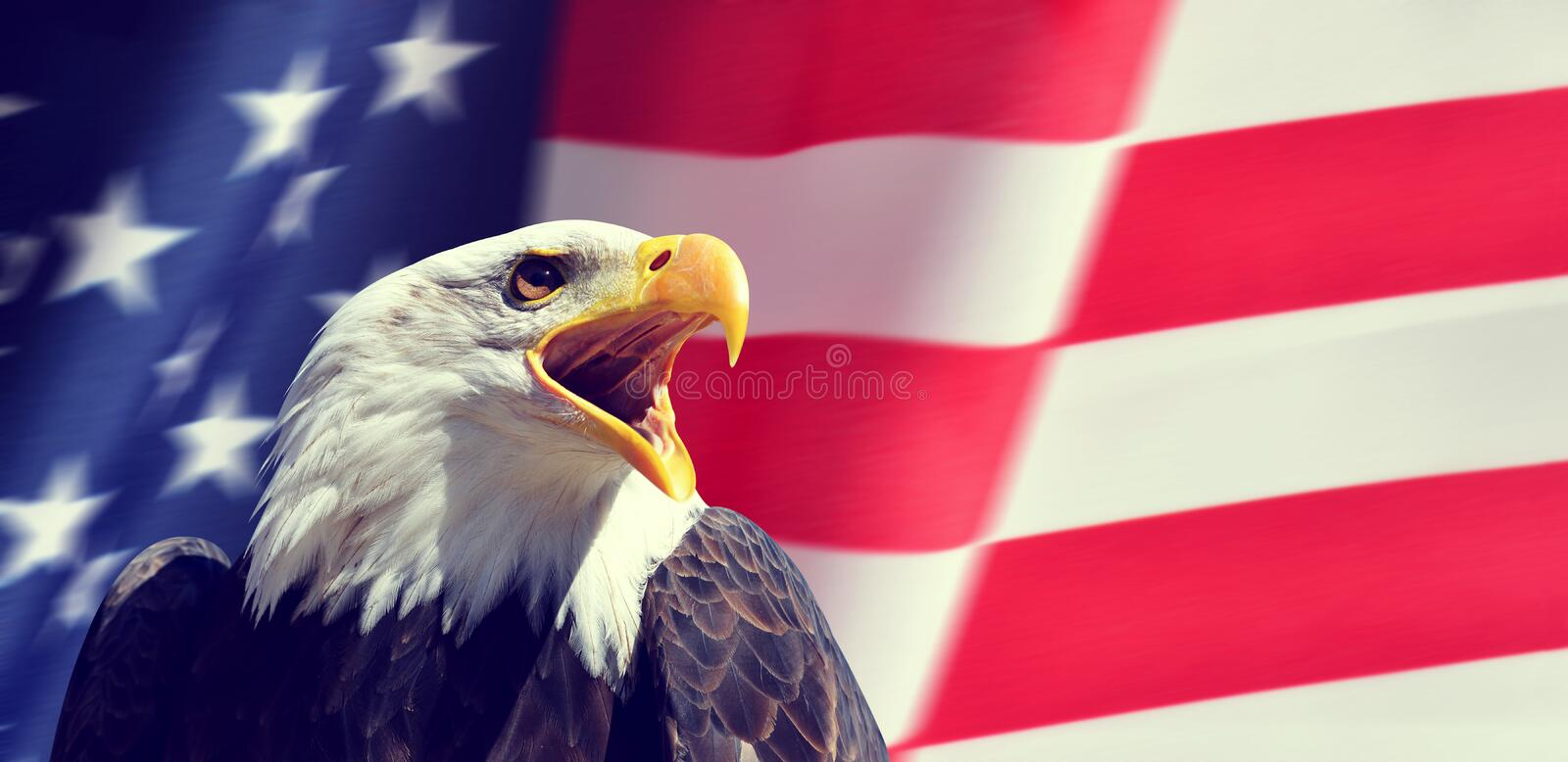 Portrait of a North American Bald Eagle Haliaeetus leucocephalus in the background USA flag. royalty free stock photography