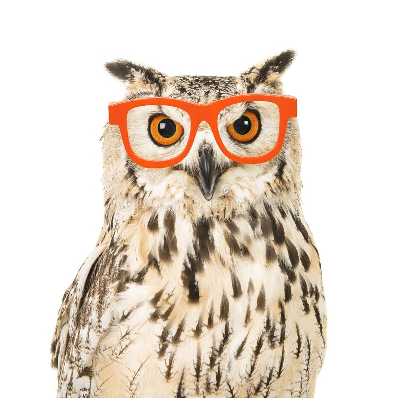 Free Portrait Of An Eagle Owl With Orange Glasses Royalty Free Stock Photo - 109995685