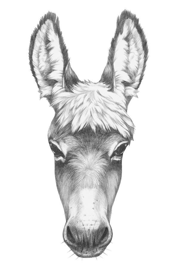 Free Portrait Of Donkey. Royalty Free Stock Images - 84964889