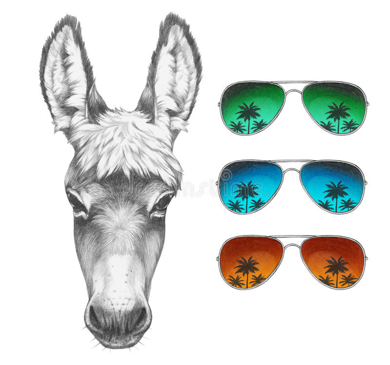 Free Portrait Of Donkey With Mirror Sunglasses. Royalty Free Stock Photos - 85021178