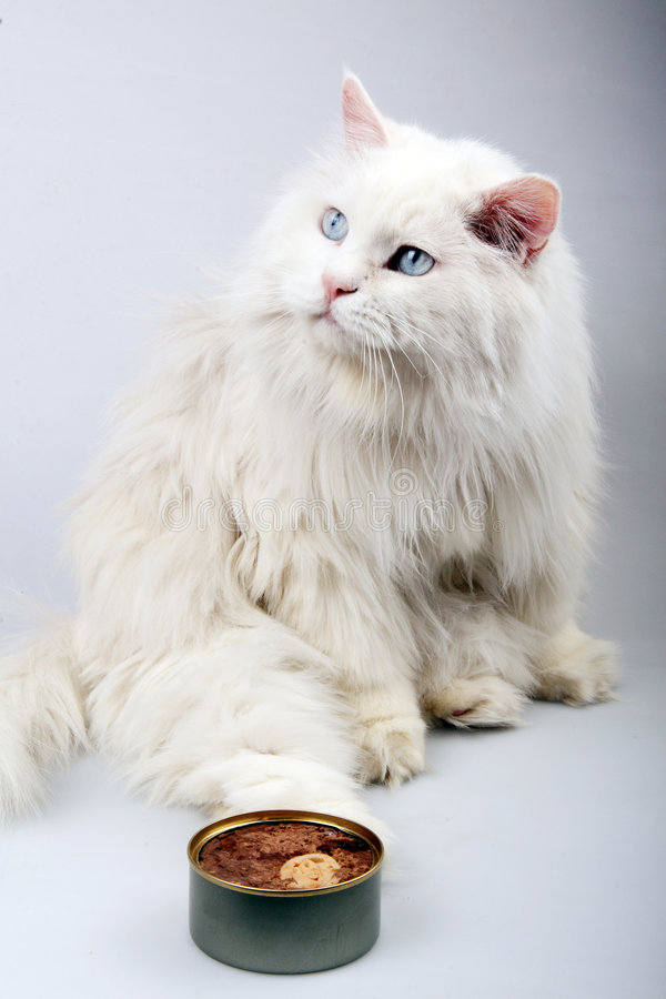 Download Portrait Of The Old Cat. Royalty Free Stock Images - Image: 7133639