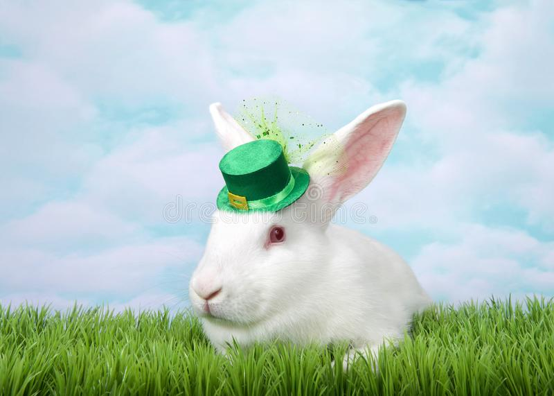 Portrait of one white albino bunny rabbit wearing St Patrick`s Day hat stock images