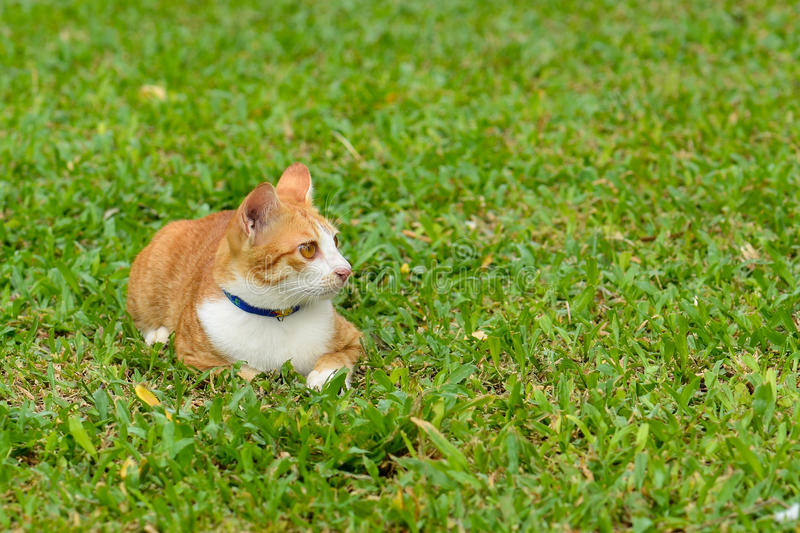 Portrait of orange cat. On green grass background stock photography