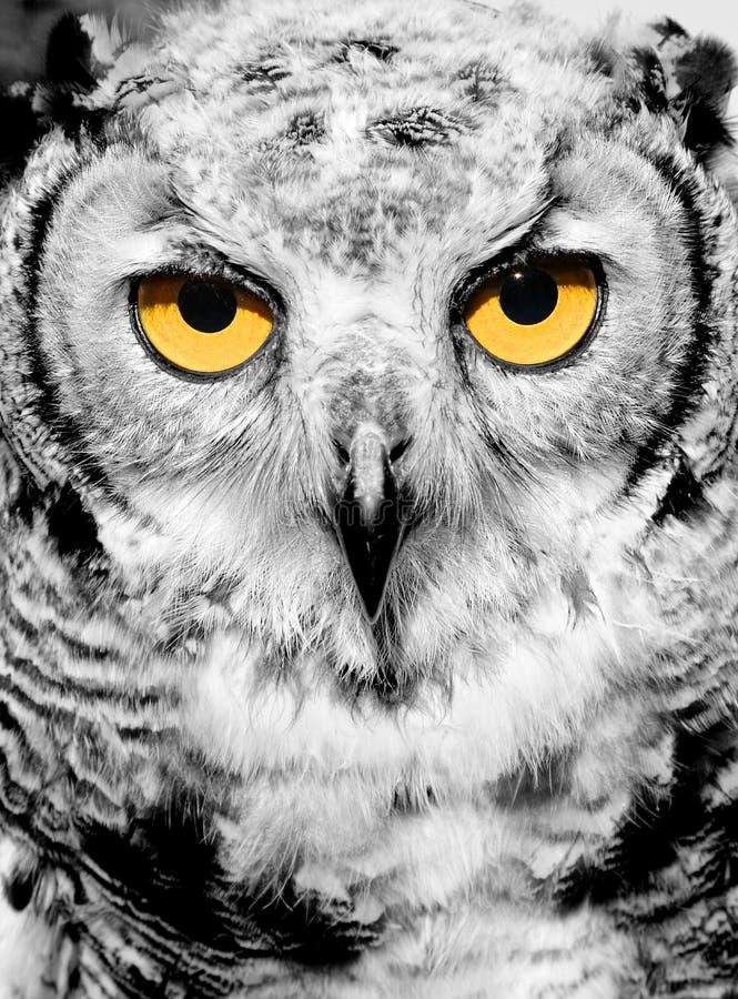 Portrait Of Owl Stock Photos