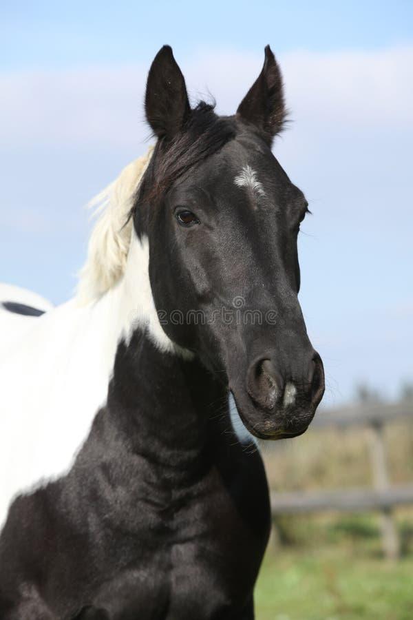 Download Portrait Of Paint Horse Mare Stock Photo - Image: 30414878