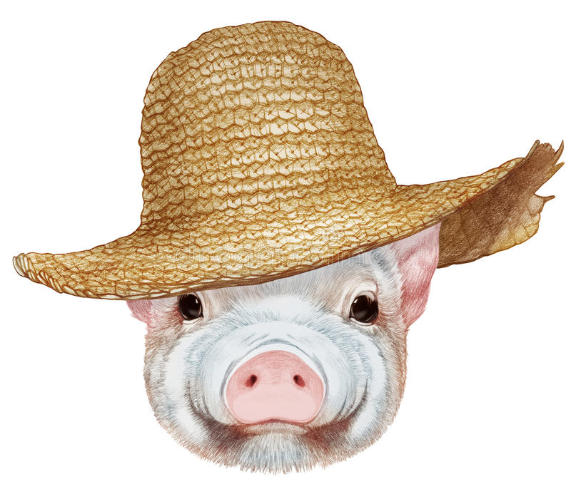 Portrait of Piggy with straw hat. Hand-drawn illustration, digitally colored stock illustration