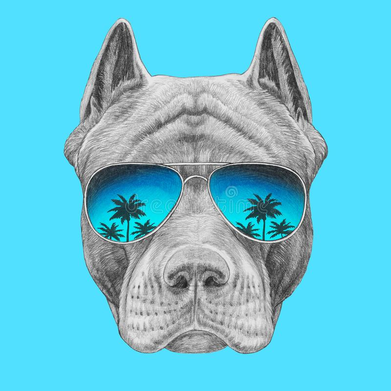 Portrait of Pit Bull with mirrored sunglasses. Hand-drawn illustration. Hand drawn illustration of Pit Bull royalty free illustration