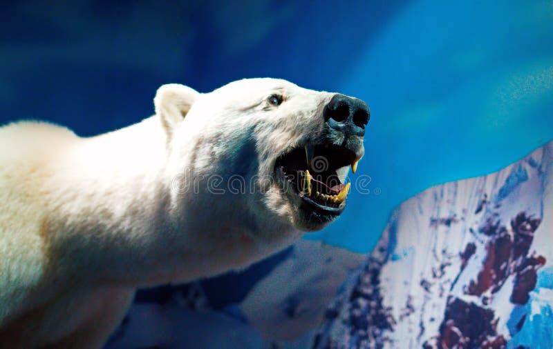 Portrait of a Polar Bear. Stuffed polar bear in the aquarium stock image