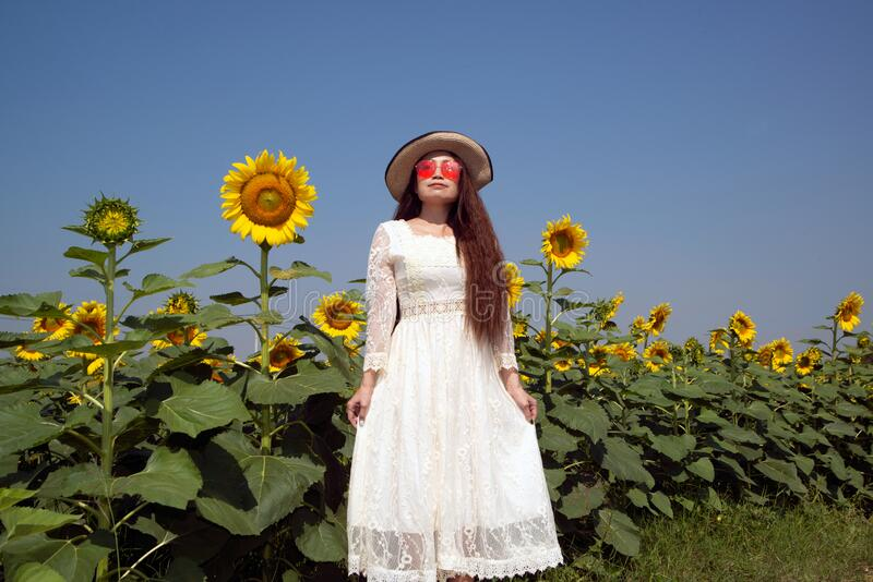 Portrait of pretty Asian women are fun,happiness and pose in a variety of gestures in sunflower fields. Portrait of pretty Asian woman are fun, happiness and stock photography
