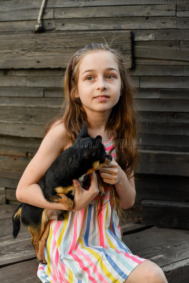 The child spending time with her pet. Little girl with chihuahua dog on the background of a wooden backdrop. Portrait of pretty small girl with pet. The child royalty free stock image