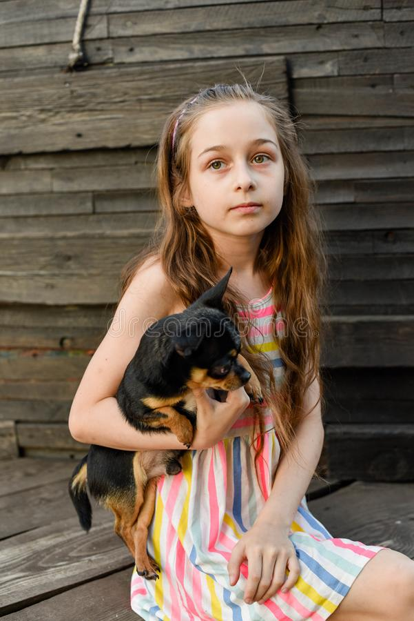 The child spending time with her pet. Little girl with chihuahua dog on the background of a wooden backdrop. Portrait of pretty small girl with pet. The child royalty free stock photo
