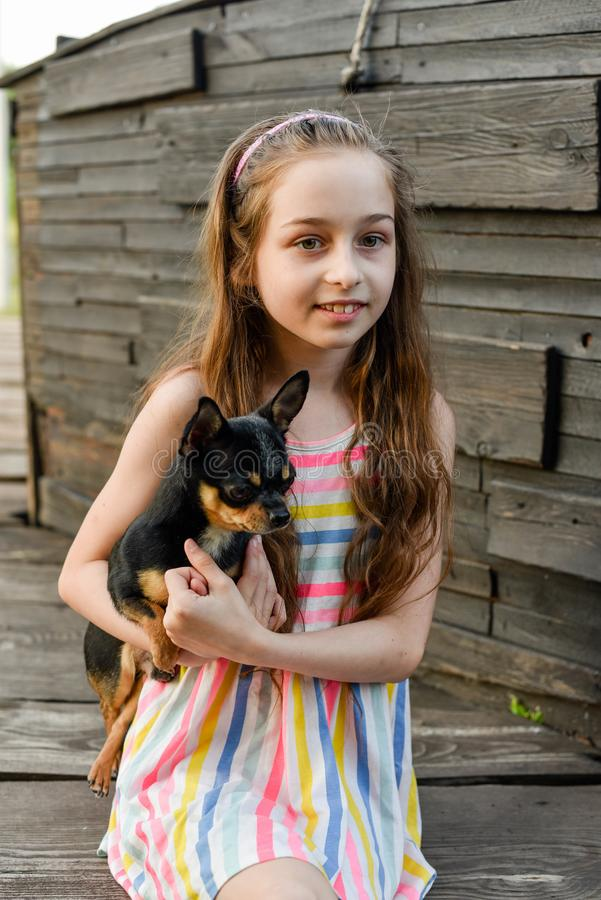 The child spending time with her pet. Little girl with chihuahua dog on the background of a wooden backdrop. Portrait of pretty small girl with pet. The child stock photos