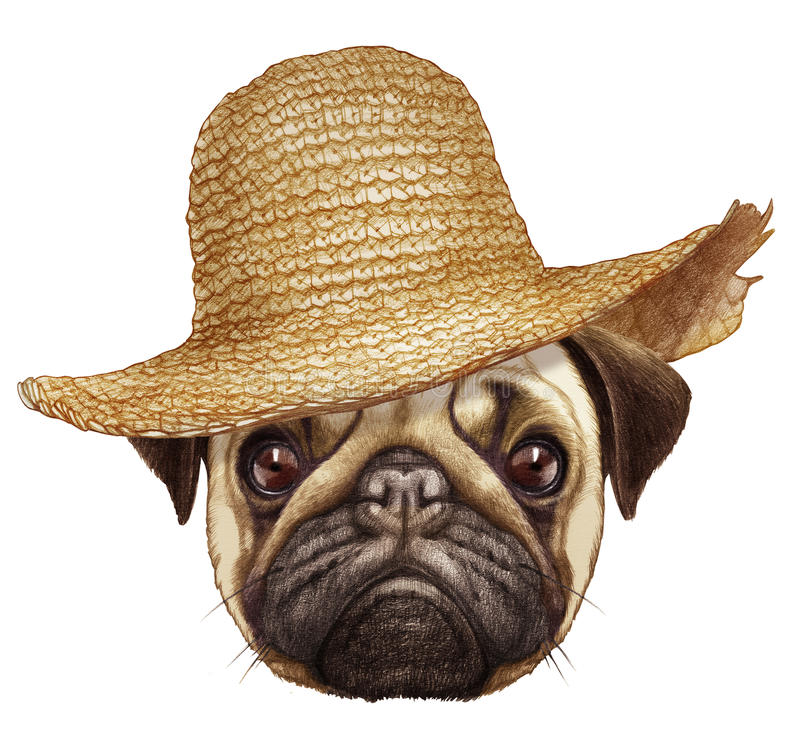 Portrait of Pug with straw hat. Hand-drawn illustration, digitally colored royalty free illustration