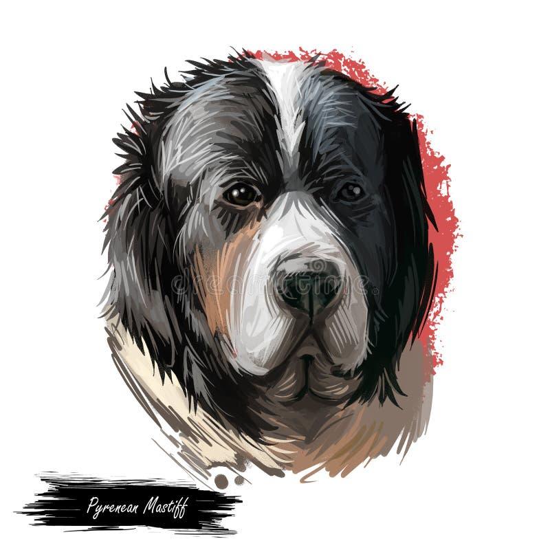 Portrait pyrénéen de chien de mastiff d'isolement sur le blanc Illustration d'art de Digital de chien tiré par la main pour le We illustration de vecteur