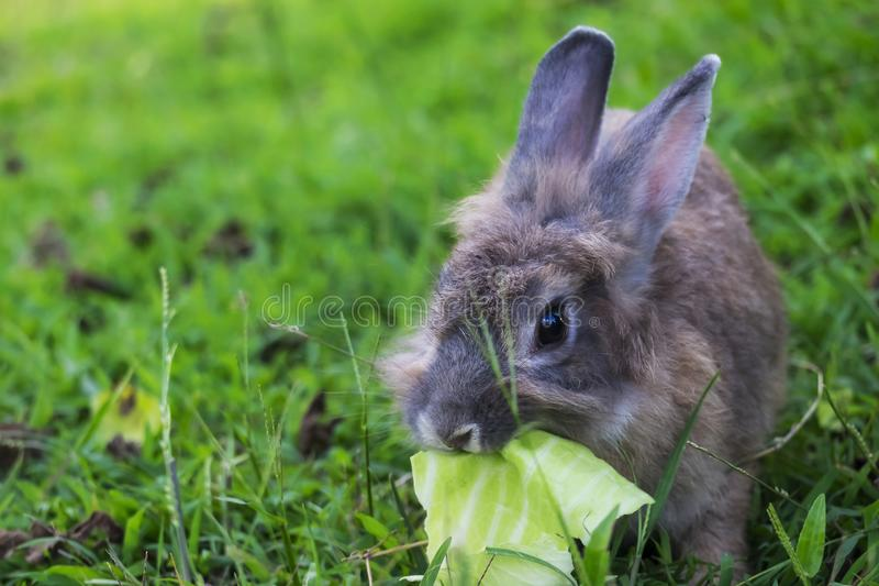 Baby rabbit in grass. stock photos