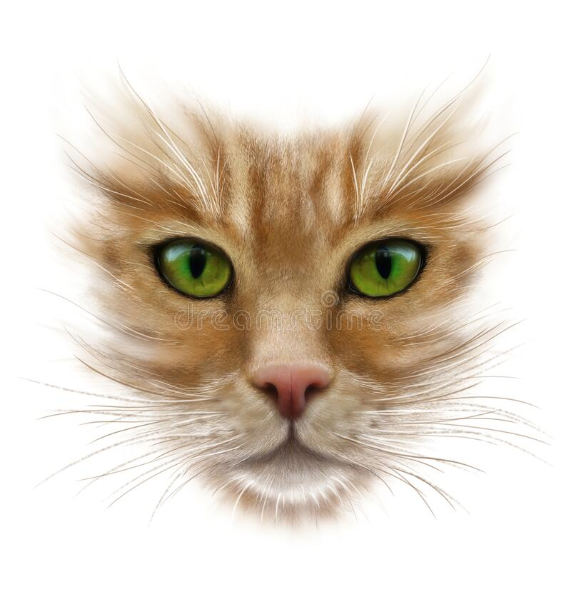 Portrait of a red cat on a white background, green eyes, long whiskers stock illustration