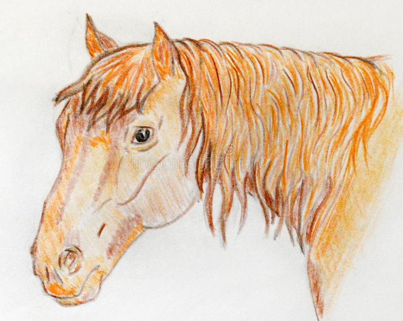 Portrait of a red horse drawn with colored pencils vector illustration