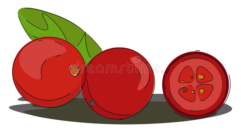 Portrait of red cranberries vector or color illustration vector illustration