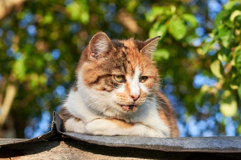 Portrait of a sad homeless cat sitting on the roof against the background of trees, homeless animal theme. Portrait of a sad cute homeless cat sitting on the stock photos