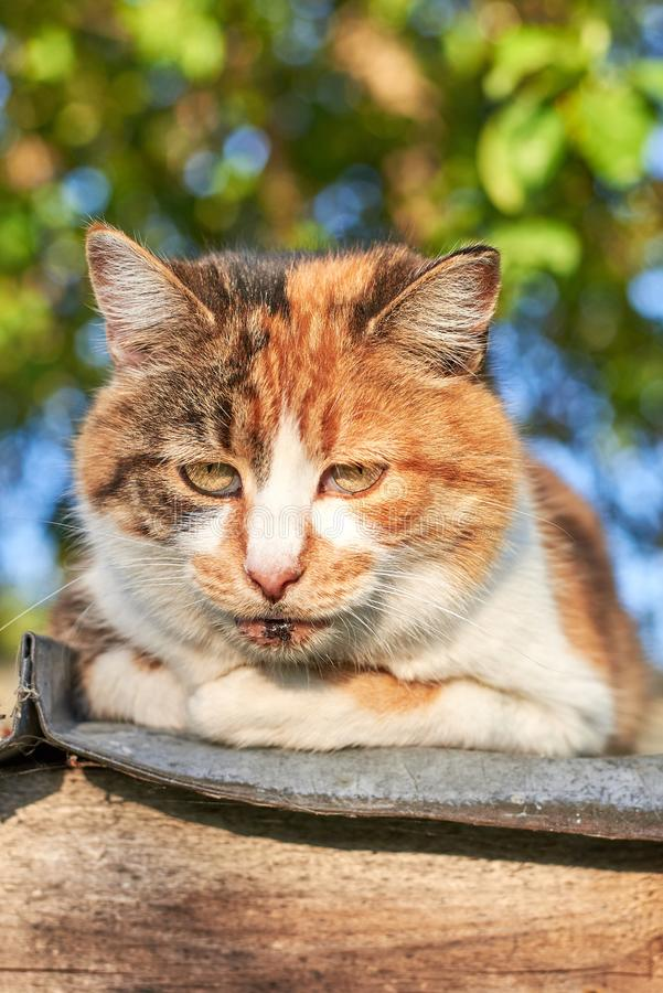 Portrait of a sad homeless cat sitting on the roof against the background of trees, homeless animal theme. Portrait of a sad cute homeless cat sitting on the stock photography