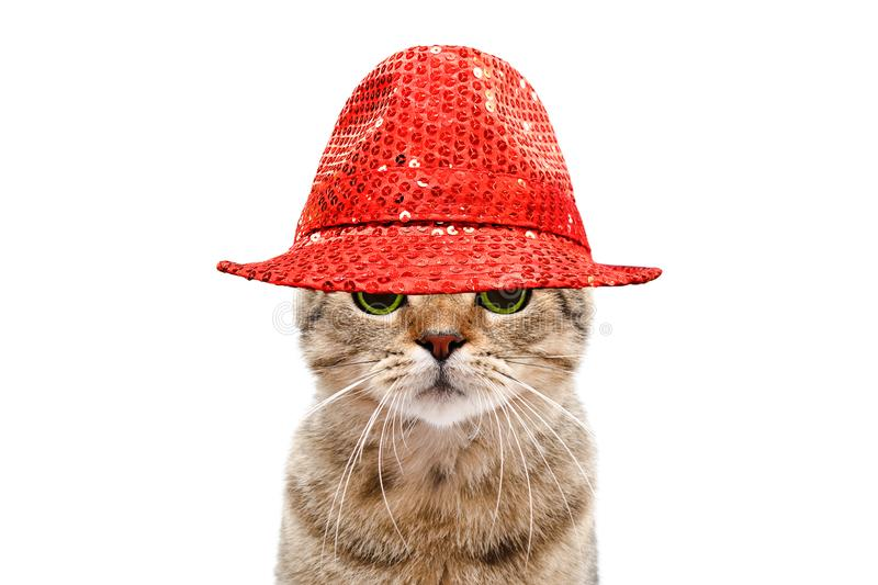 Portrait of a secretive cat in a red hat stock photography