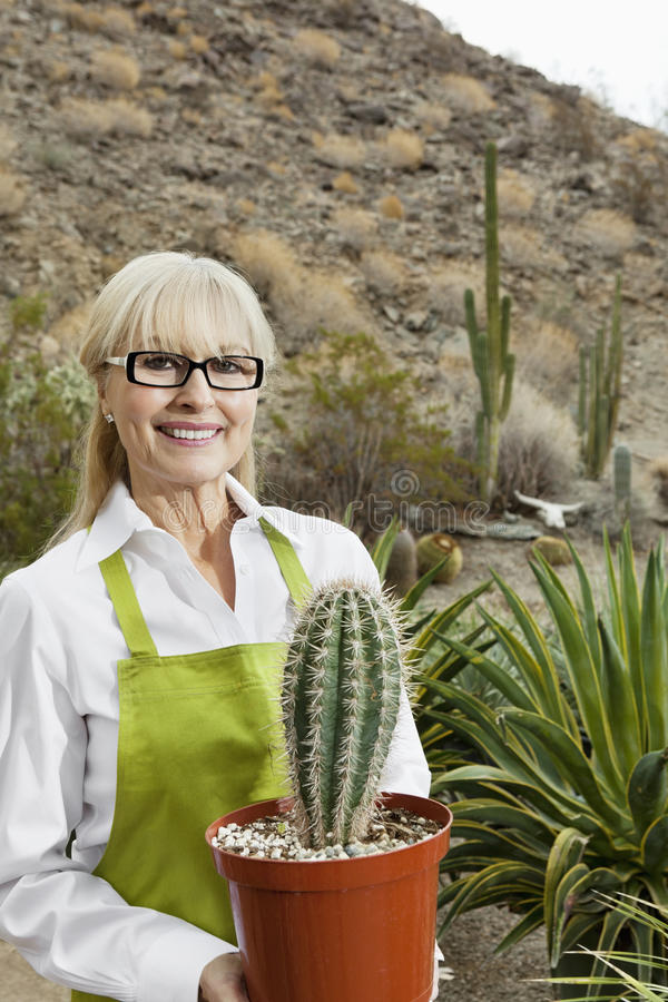 Portrait of a senior gardener holding potted cactus plant stock images
